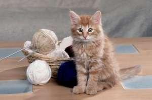 猫咪疫苗有哪些隐患?